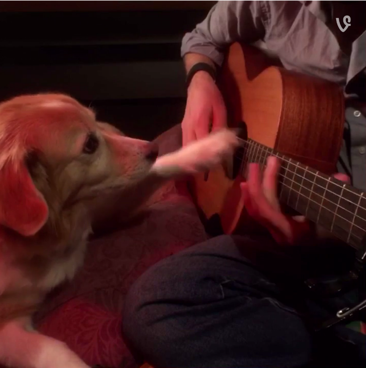 Dog jams Coldplay Fix You clocks songs cover