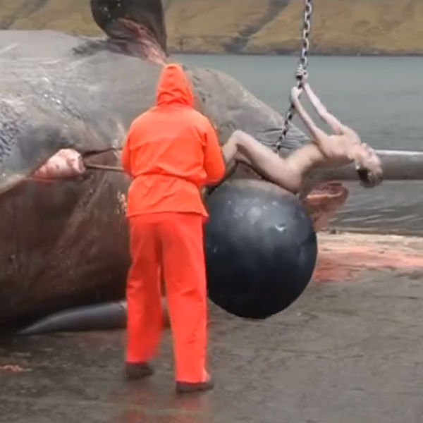 watch miley cyrus explodes a dead whale on her wrecking